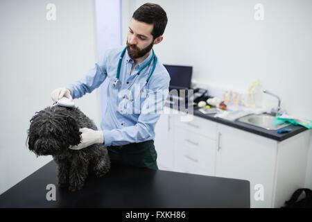 Vet examining dog - Stock Photo