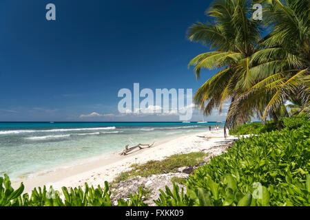 dream beach on the Caribbean Island Isla Saona,  Parque Nacional del Este, Dominican Republic, Carribean, America, - Stock Photo
