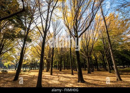 Autumn in Yoyogi Park, Tokyo, Japan - Stock Photo