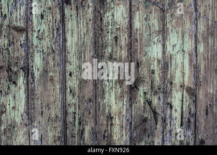 old green paint on rotten wood - Stock Photo