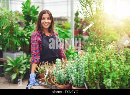 Smiling young female horticulturalist working in a greenhouse at a nursery standing at a table displaying potted - Stock Photo