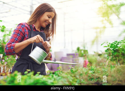 Young female nursery owner and entrepreneur watering potted plants in her greenhouse as she propagates them for - Stock Photo