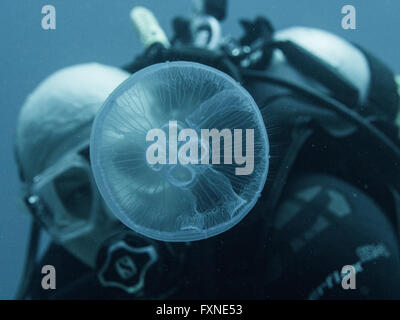 A diver and a Jellyfish Eye - Stock Photo