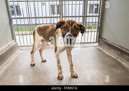 Abandoned dog in rescue center - Stock Photo