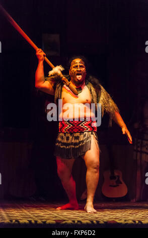 Maori indigenous cultural traditions: a warrior performing a traditional haka dance, Rotorua, North Island, New - Stock Photo