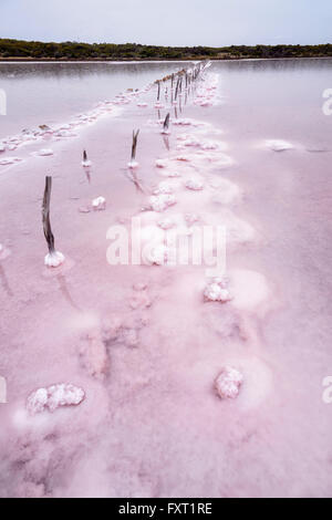 Pink Saltpan near Parnka Point, the Coorong National Park, Fleurieu Peninsula, South Australia, SA, Australia - Stock Photo