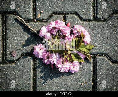Twig of sakura tree is lying on the stone paving. Purple flowers. - Stock Photo