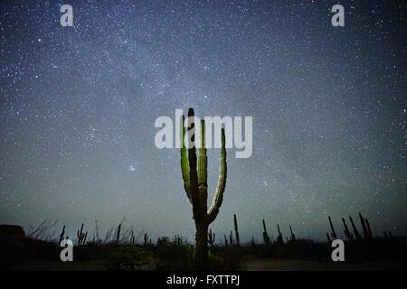 Cactus, La Paz, Baja California, Mexico - Stock Photo
