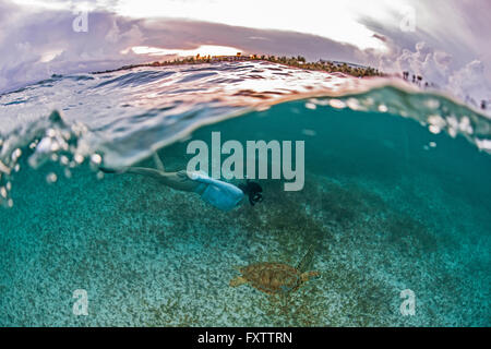 Snorkeler gets close to sea turtle in the shallows of Akumal Bay at sunset, Mexico - Stock Photo