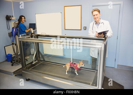 Vets looking at a dog on hydrotherapy treadmill - Stock Photo