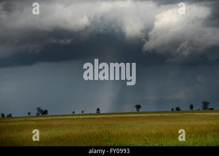 A storm brewing over the savanna in Serengeti national park. - Stock Photo
