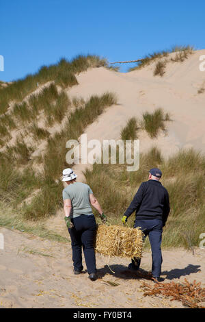 Conservation work underway on the sand dunes of Lytham St Annes. Dune Conservation Work, Blackpool, Lancashire, - Stock Photo
