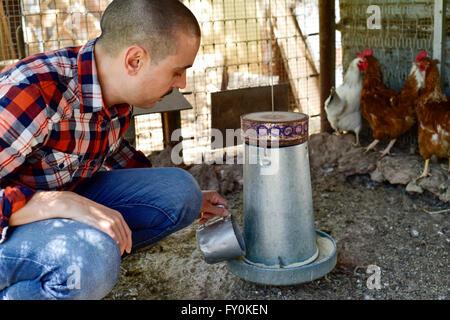 closeup of a young caucasian farmer man wearing a plaid shirt feeding the hens in a henhouse - Stock Photo