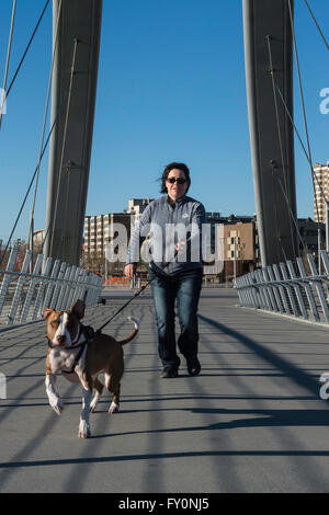 Running pit bull type dog, mixed breed, with female owner in background, George C King Bridge, Calgary, Alberta, - Stock Photo