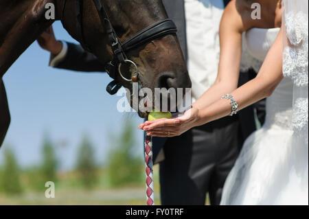 feeding horse his hands - Stock Photo