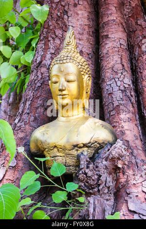 head Buddha in the  Bodhi Tree - Stock Photo