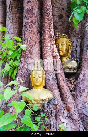 Buddha in the  Bodhi Tree head - Stock Photo