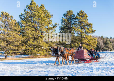 Horse drawn sleigh ride, Silver Skate Festival, Hawrelak Park, Edmonton, Alberta, Canada - Stock Photo