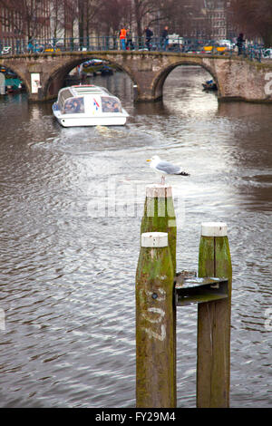 Seagull nearby famous bridges in Amsterdam, The Netherlands - Stock Photo