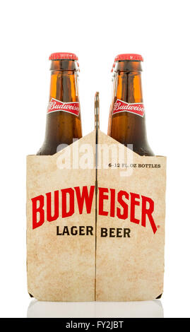 Winneconne, WI - 12 March 2016: A six pack of Budweiser lager beer with  a different design than the current. - Stock Photo