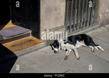 Black and white mongrel dog sleeping in the sun. - Stock Photo