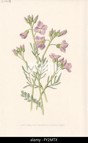 FLOWERS: Lady's-Smock, Bittercress or Cuckoo Flower, antique print c1895 - Stock Photo
