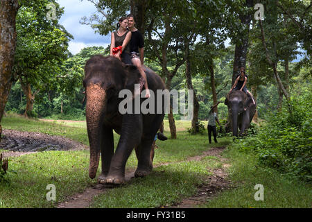 Indian or one-horned rhinoceros and tourists on elephant safari in Chitwan National Park, Nepal - Stock Photo