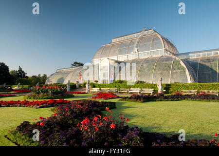 Dahlia 'Bishop of Llandaff' and Heliotropium arborescens 'Marine' in front of the Palm House at Kew Gardens, London - Stock Photo