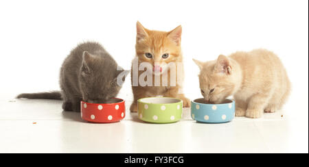 Three kittens feeding from bowls - Stock Photo