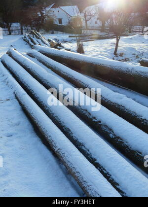 Czech Republic, Poldovka. Logs of freshly felled spruce trees covered by snow - Stock Photo
