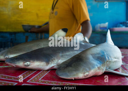 Selling and buying small sharks. Fishing gypsy village. Koh Mook (Muk) is a small rocky island off the coast of - Stock Photo