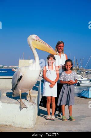 Pafos, Pelican in the harbour with tourists, south Cyprus, Europe - Stock Photo