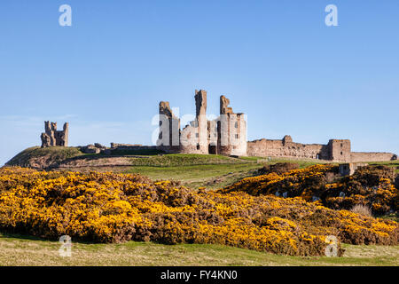 Dunstanburgh Castle in Spring, with yellow gorse in flower, Northumberland, England, UK - Stock Photo