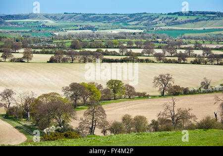 View from Ivinghoe Beacon, the Chilterns. - Stock Photo