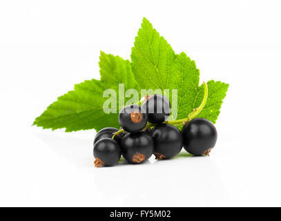 Black currants isolated on white - Stock Photo