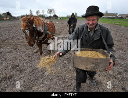 Gomel Region, Belarus. 22nd Apr, 2016. Agricultural works in the village of Novoselki, Khoiniksky District, located - Stock Photo
