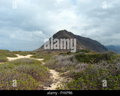 Sand trail at Kaena Point on the island of Oahu, Hawaii.  With lots of native Naupaka Kahakai plant vegetation surrounding - Stock Photo