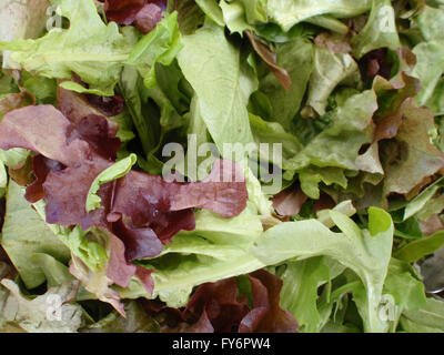Spring Leaf Lettuce on display at farmers market in San Francisco, California. - Stock Photo