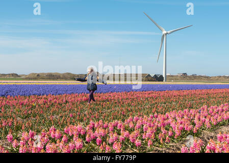 A young girl playing amongst the spring flowers in a typical Dutch springtime scene - Stock Photo