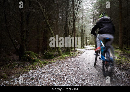 A girl rides away along a sunlit stone / gravel path as it winds it's way through coniferous trees in a forest. - Stock Photo