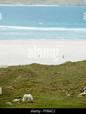 A white horse grazes on the dunes near Luskentyre beach Isle of Harris, Outer Hebrides, Scotland, UK. - Stock Photo
