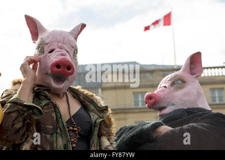 London, United Kingdom - April 16, 2016: Anti-Austerity March. Two people came dressed as pigs to represent the - Stock Photo
