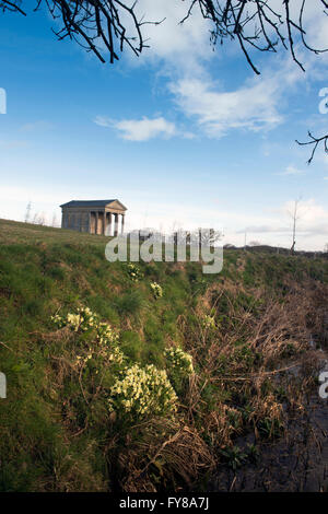 Primroses at the Temple of Harmony at Halswell Park near Bridgwater, Somerset - Stock Photo