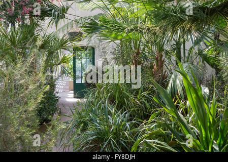 Inside the glasshouses at Sheffield botanical gardens. Full of leafy, tropical plants. - Stock Photo