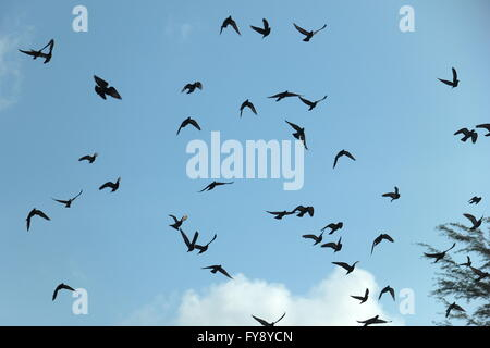Freedom and liberty, a flock of pigeons in the sky. - Stock Photo