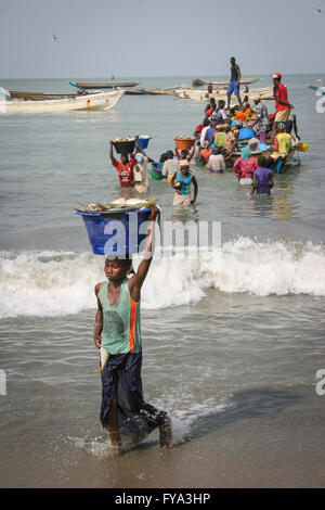 African women carrying buckets on their heads full of fishes from fishing boats in the sea, Gambia, Africa, - Stock Photo