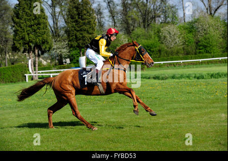 Racing, horse, Partynice Wroclaw, Poland, Open Season 2016, 24 april 2016, wroclaw, dolnoslaskie, partynice, poland, - Stock Photo