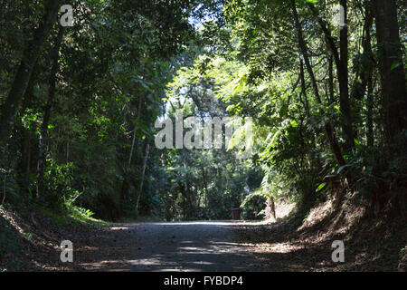 Sao Paulo, Brazil. 24th April, 2016. A trail is seen during this sunny day in Cantareira State Park (Portuguese: - Stock Photo