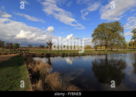 Bushy Park, London, UK. 25th April 2016. Reflections in the Heron Pond at Bushy Park on an afternoon of sunshine - Stock Photo
