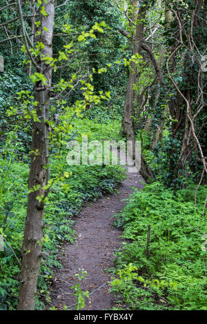 Dirt path through woodland in spring time - Stock Photo